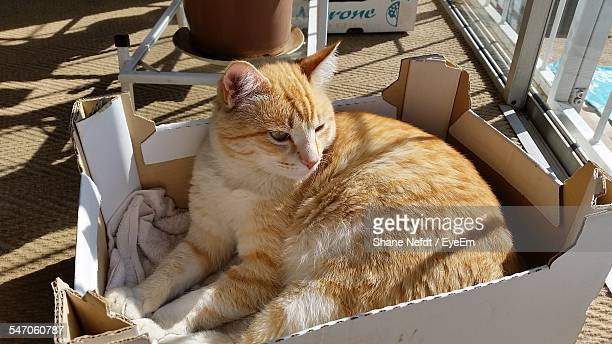 Cat Lying In Box