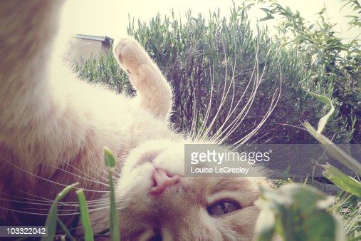 Cat lying in the sun : Stock Photo