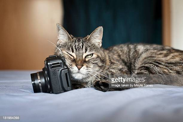 Cat lying on bed with camera