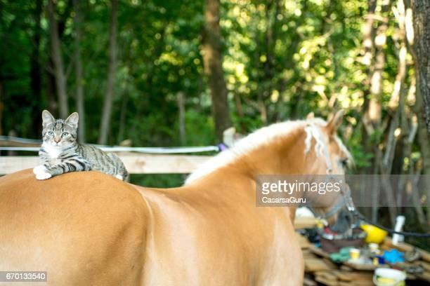 Cat Lying On Horse Back