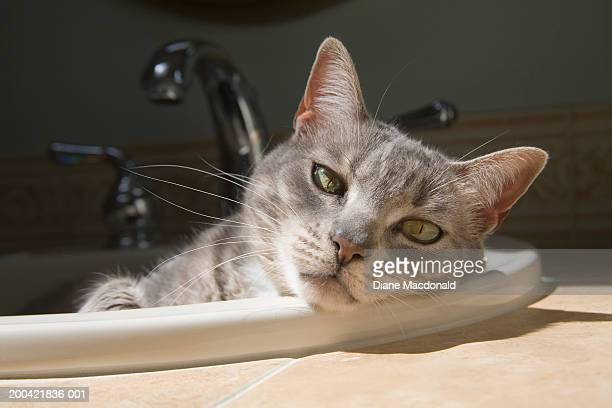 Cat lying on in bathroom sink.
