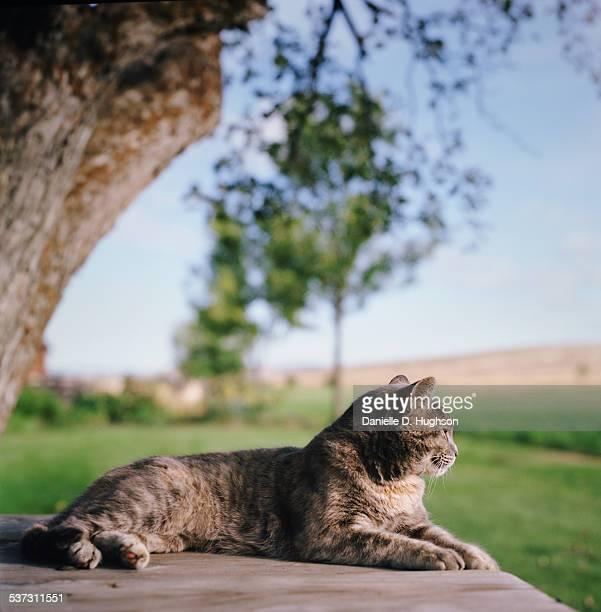 Cat Lying on Picnic Table on Farm