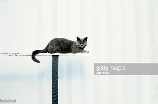 Cat lying on table, close-up