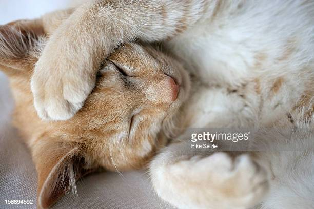 A cat lying with a paw on its head