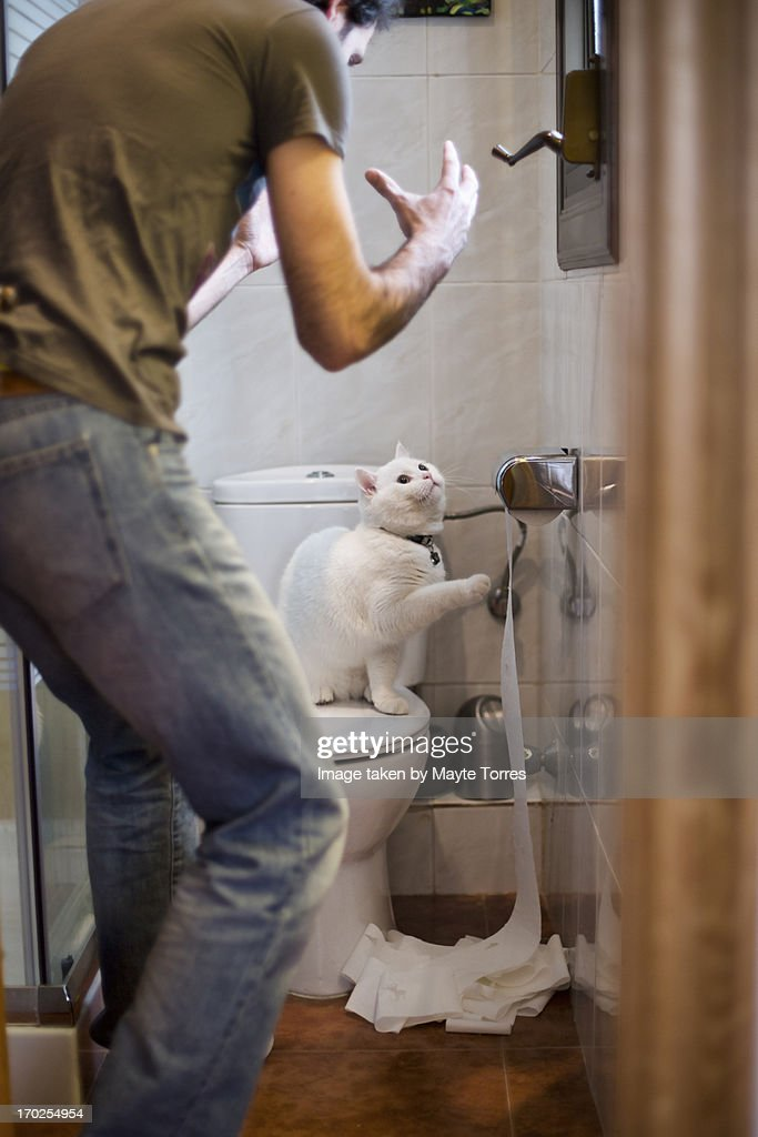 Cat misbehaving in toilet : Stock Photo