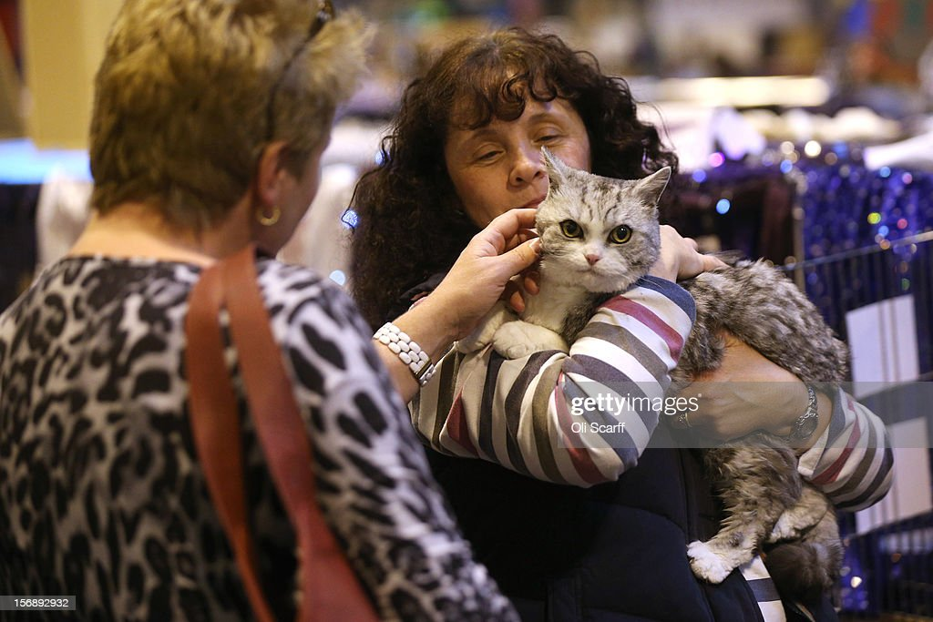 A cat named 'Valentino Rossi' is held by its owner before being exhibited at the Governing Council of the Cat Fancy's 'Supreme Championship Cat Show' held in the NEC on November 24, 2012 in Birmingham, England. The one-day Supreme Cat Show is one of the largest cat fancy competitions in Europe with over one thousand cats being exhibited. Exhibitors aim to have their cat named as the show's 'Supreme Exhibit' from the winners of the individual categories of: Persian, Semi-Longhair, British, Foreign, Burmese, Oriental, Siamese.