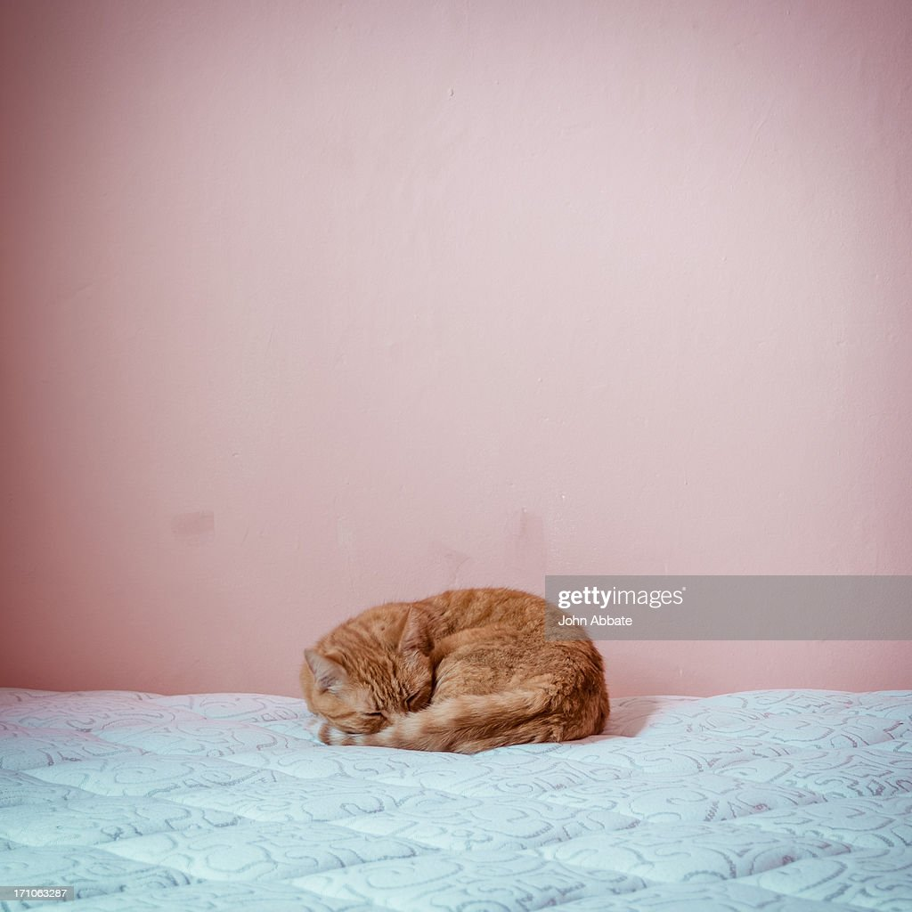 Cat Napping