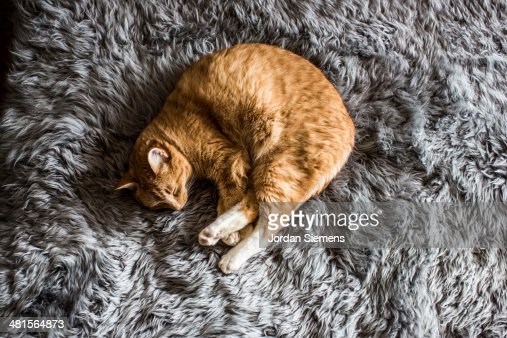 A cat napping : Stock Photo