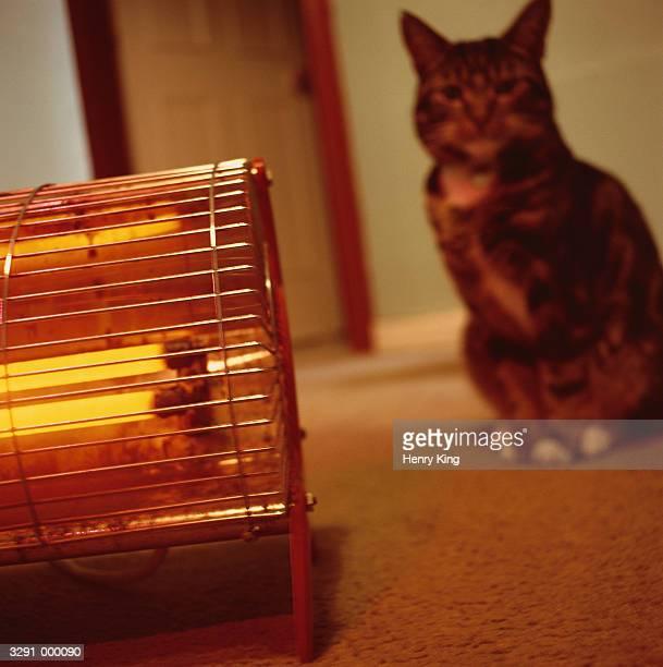 Cat near Electric Heater