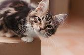 Cat On A Box