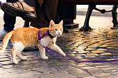 Cute red kitten on a leash walking on a street paving in the city.