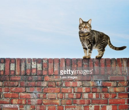 Cat on a wall against blue sky : Stock Photo