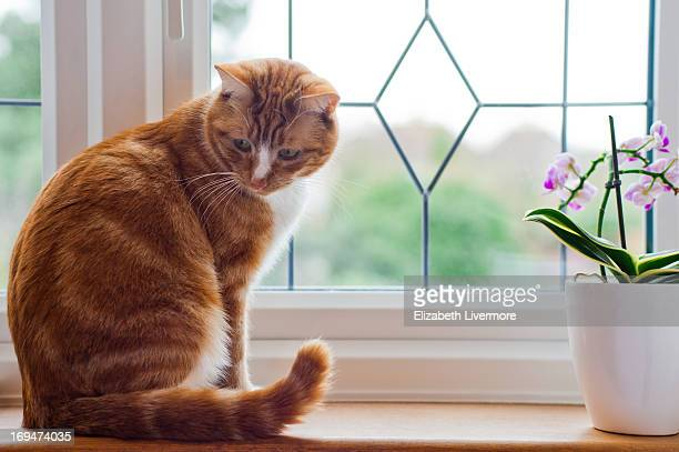 A cat on a windowsill