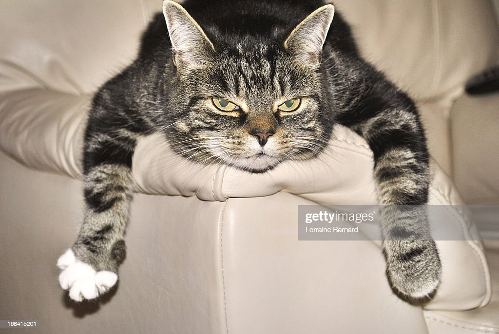 Cat on an Easy Chair : Stock Photo