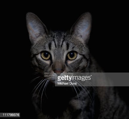 Cat on black background looking at camera : Stock Photo