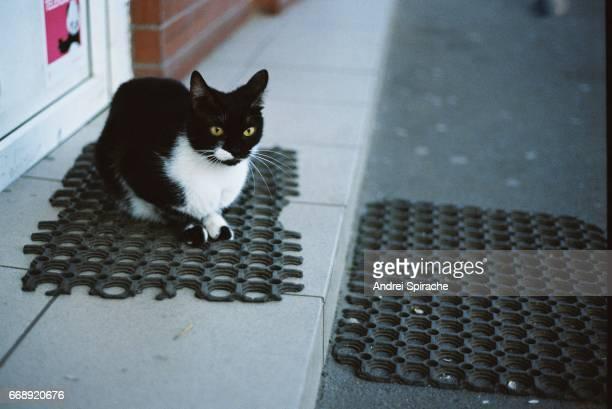 Cat on doormat