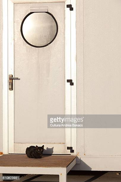 Cat on doorstep