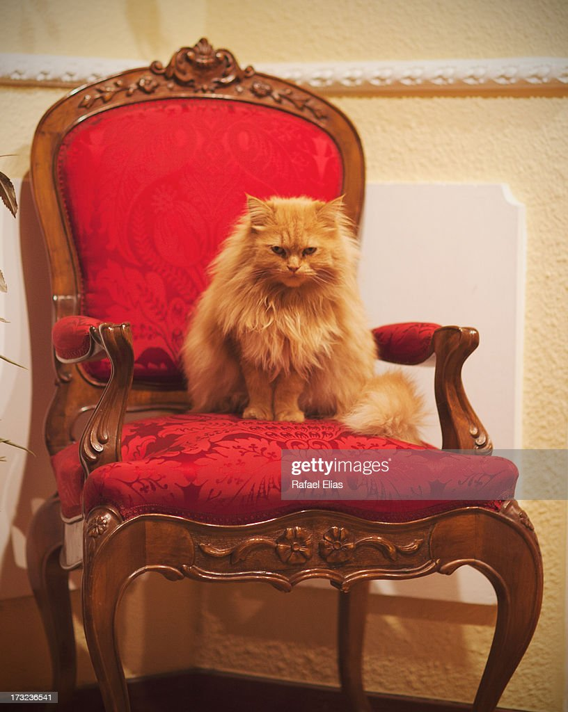 Cat on her throne : Stock Photo