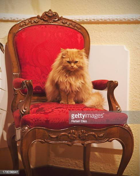 Cat on her throne