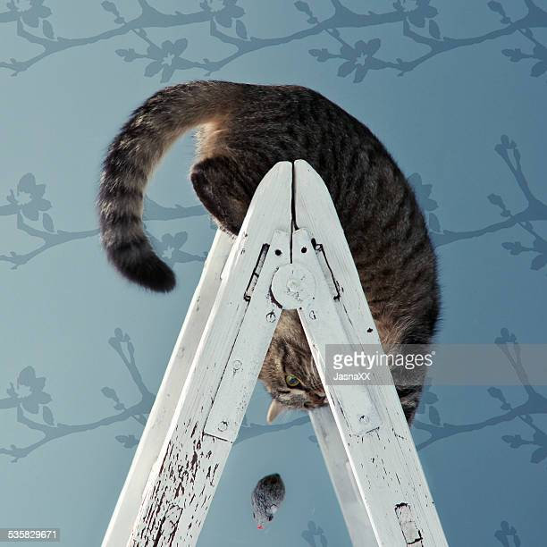 Cat on ladder playing with a toy mouse