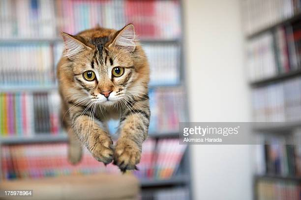cat on midair