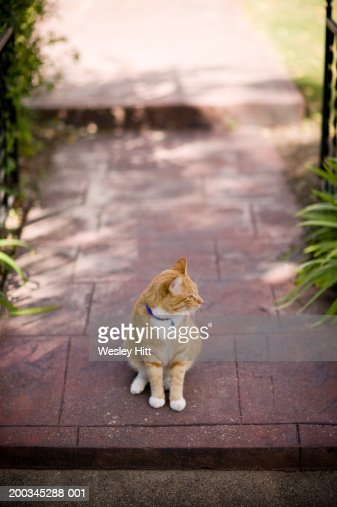 Cat on path to home, elevated view : Stock Photo