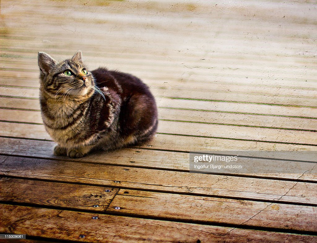 Cat on porch : Stock Photo