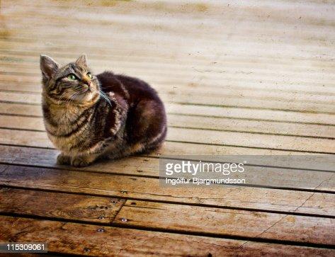 Cat on porch : Stock Photo