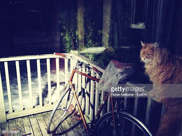 Cat on railing besides parked bicycle