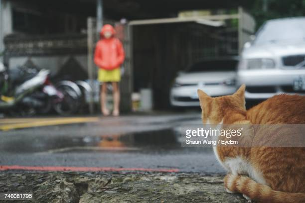 Cat On Road Against Woman Standing At Garage During Rainy Season