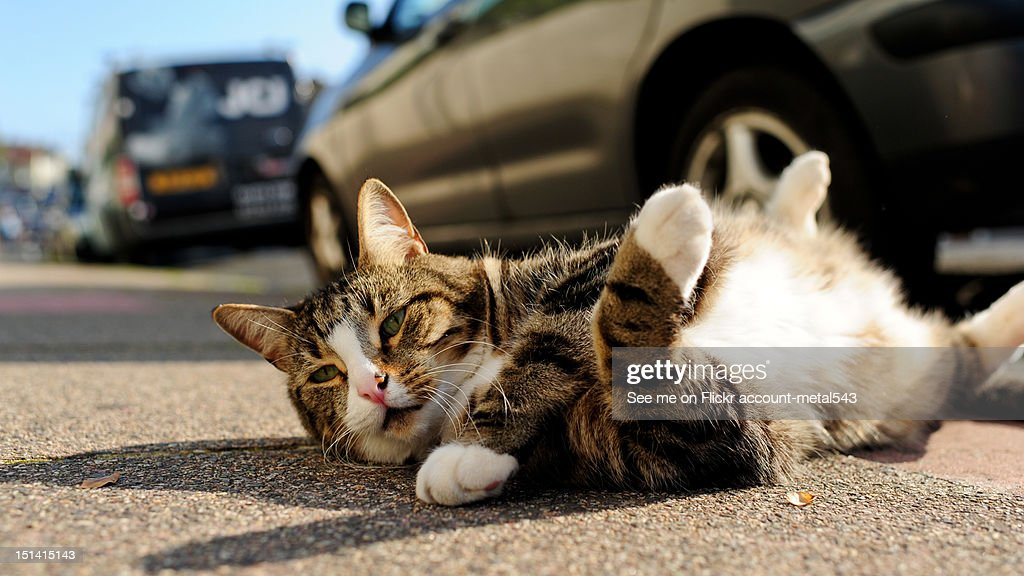 Cat on street : Stock Photo