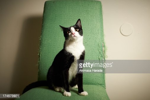 Cat on the chair : Stock Photo