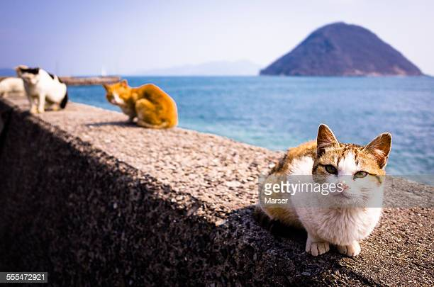 Cat on the concrete rim by seashore