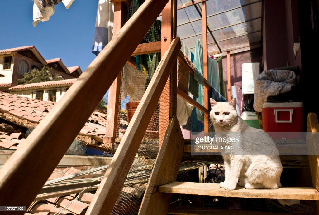 Cat on the steps : Stock Photo