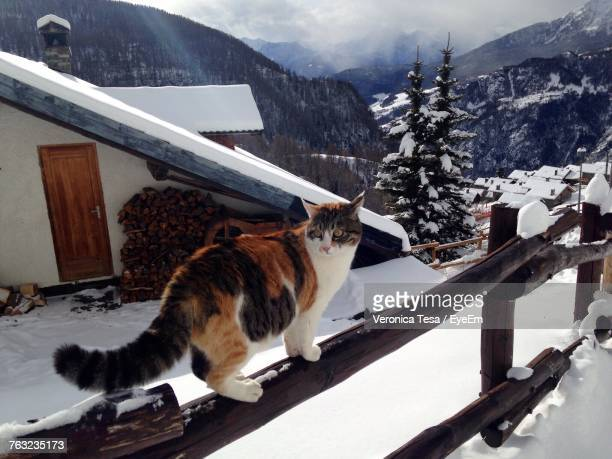 Cat On Wooden Fence During Winter