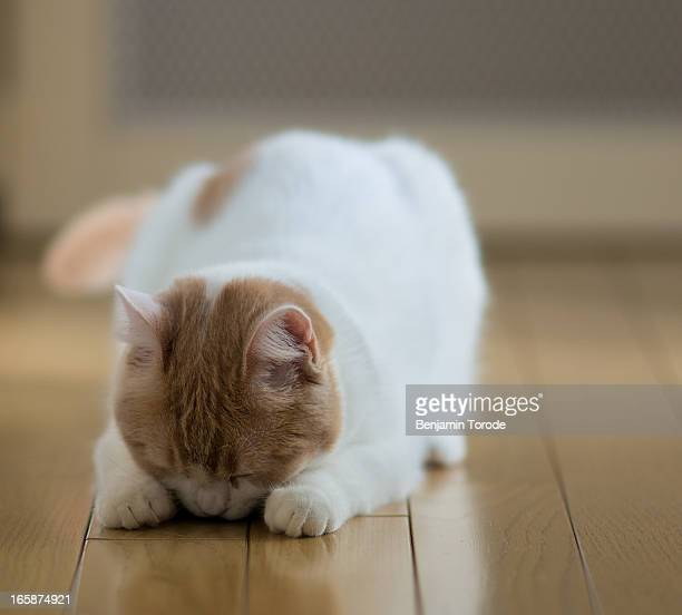 Cat on wooden floor with head lowered