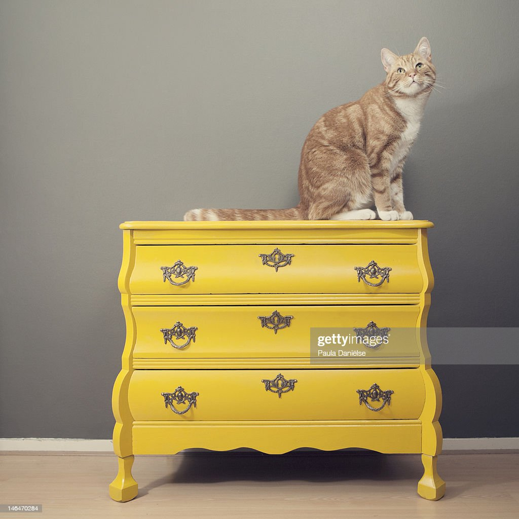 Cat on yellow cabinet.