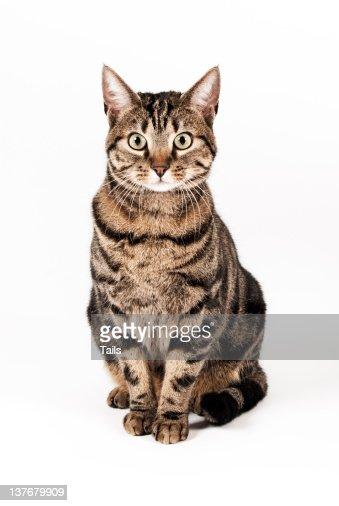 Cat Ora : Photo