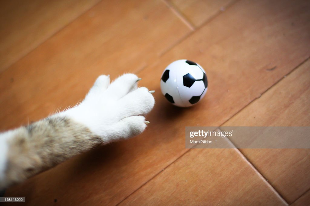 cat paw. cat foot. soccer ball.
