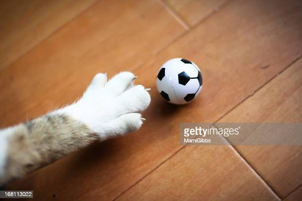 Cat Paw is try to kick a soccer ball