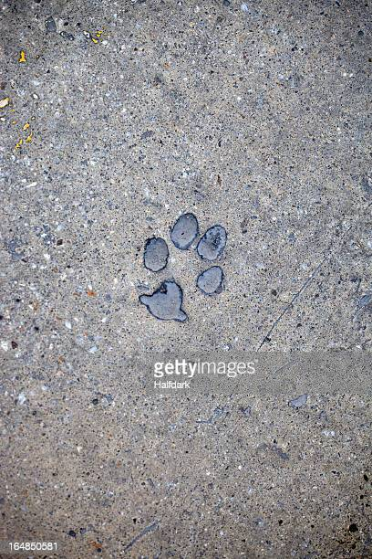 Cat paw print in concrete
