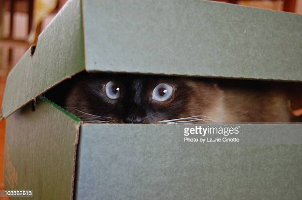 Cat peeking out of box