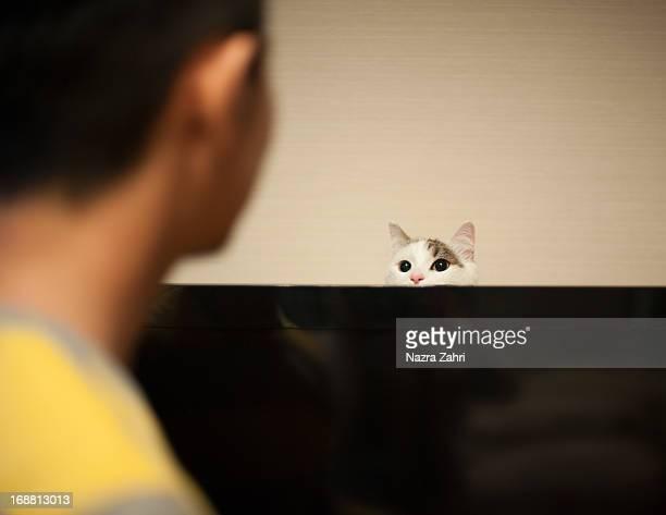Cat peeping behind tv
