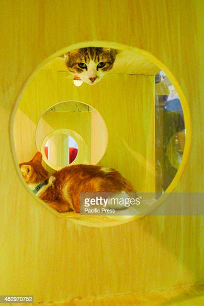 A cat peeping out of the top hole of a wooden platform as the other cat at the bottom is sleeping Different breeds of dogs and cats Dog breeders Pet...