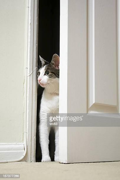 Chat par la porte donnant sur la chambre