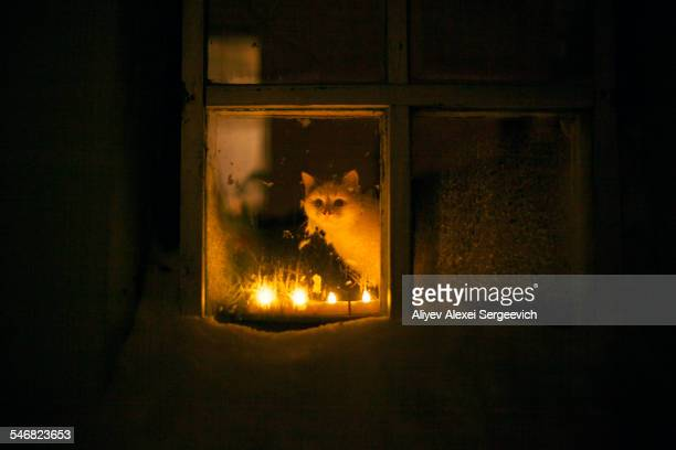 Cat peering out window by candle light at night