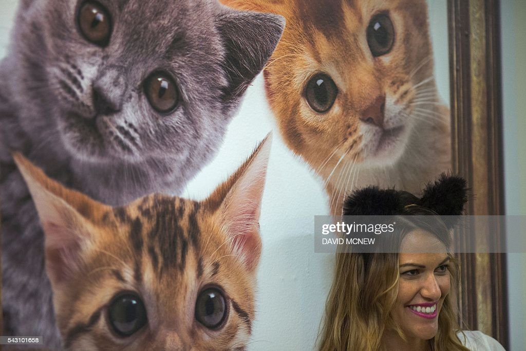 Cat photos are seen on a wall at CatConLA, a convention to show cat-related products and ideas in art, design, and pop culture, on June 25, 2016 in Los Angeles, California. / AFP / DAVID
