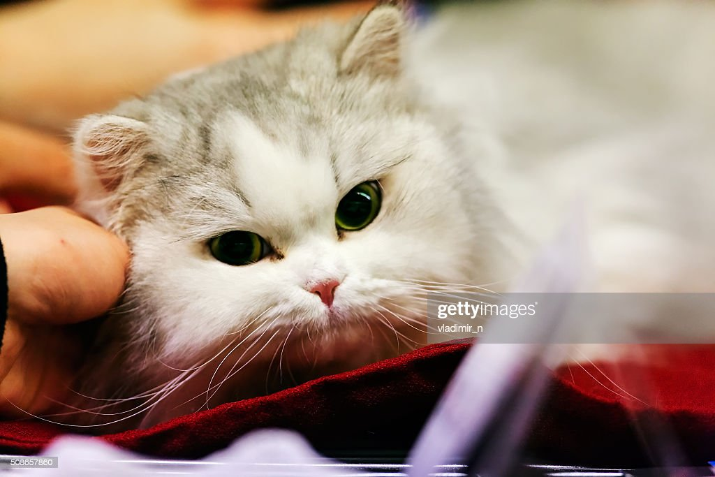 Cat : Stock Photo