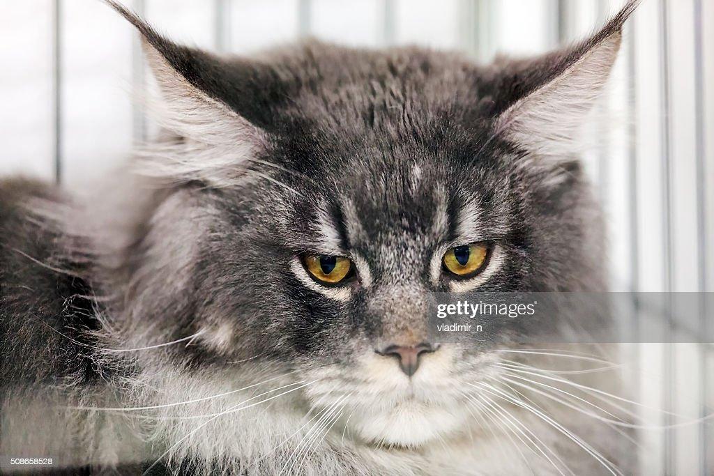 Cat : Stock Photo