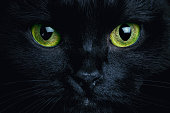 Close up photo of black cat. Witch cat. Halloween theme.